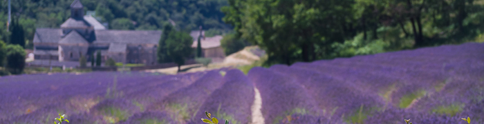 Notre-Dame de Sénanque Abbey Wheelchair Provence Accessible Tours