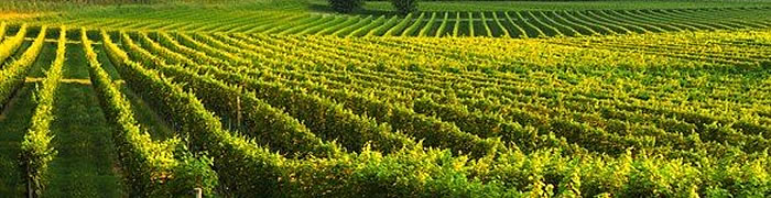 Lake Garda Wheelchair Wine Tasting Accessible Tours
